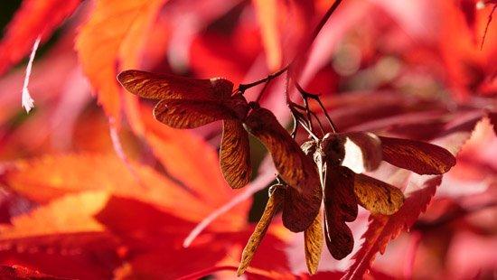 To_Autumn